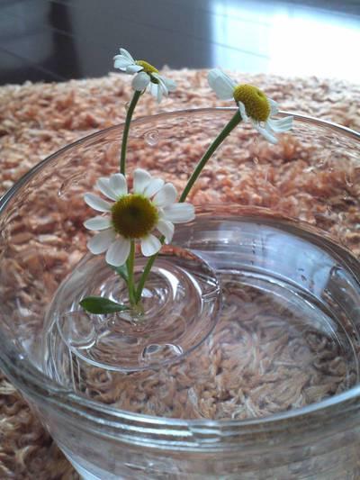 エステベッド下のお花